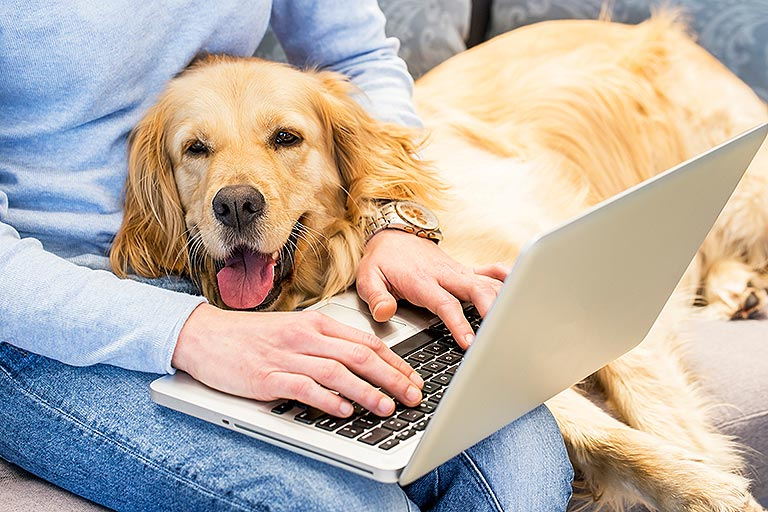 Animaltresor - Contactez-nous par mail