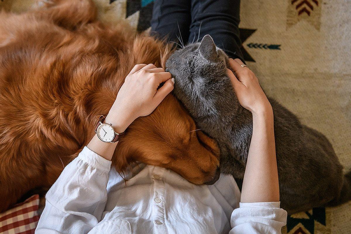 Animaltresor - À propos de nous - le meilleur pour nos compagnons