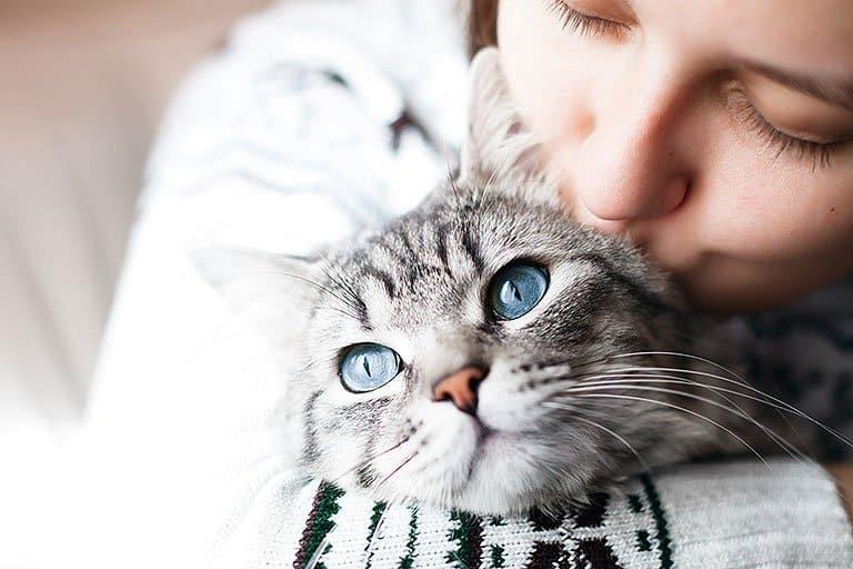 Animaltresor.com - Chat heureux petit compagnon
