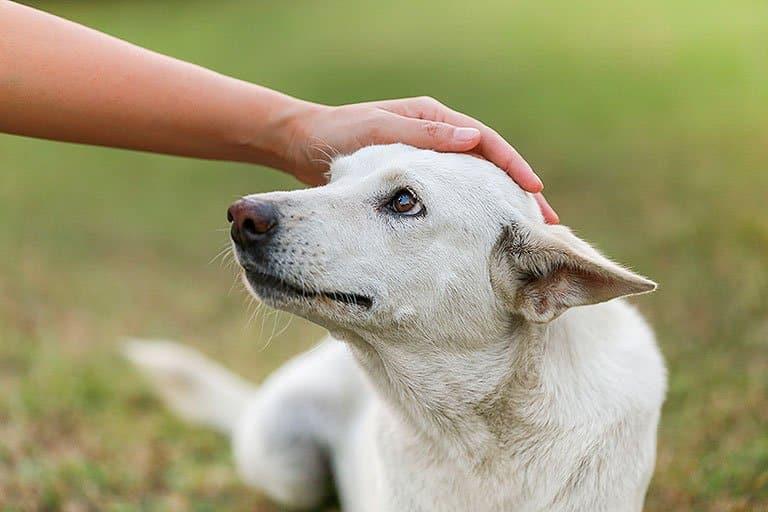 Animaltresor - chien heureux