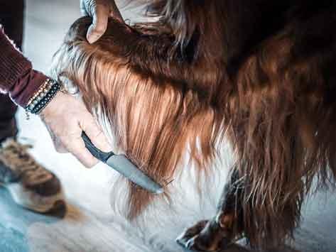 Peigne de toilettage aux dents alternées VETOCANIS pour chien poils longs