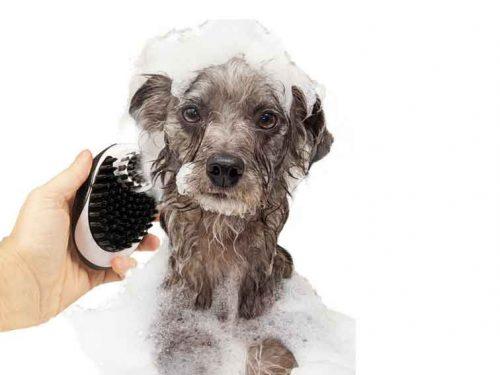 Distributeur de shampoing avec brosses en silicone pour chien