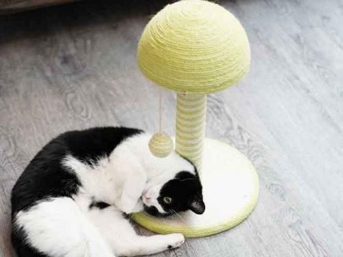 Poteau Griffoir Champignon TYROL avec chat