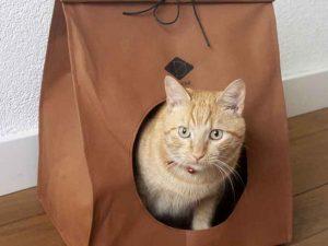 Panier look papier avec chat
