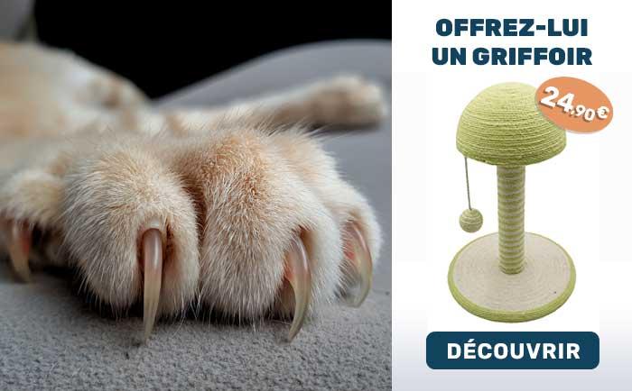 Griffoir pour chat poteau champignon